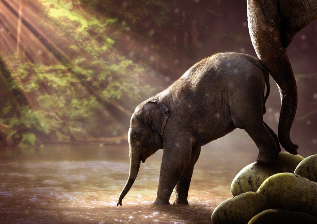 Junger Elephant der im Wasser steht